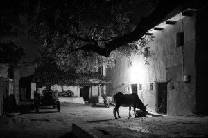 Farmyard (2016 Khajuraho)